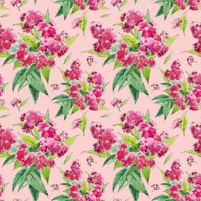 Rose flowers (Spiraea)
