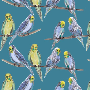 budgies BLUE