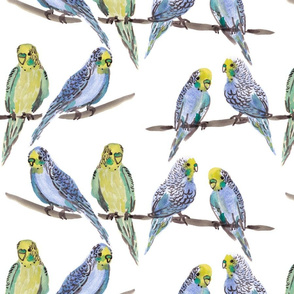 budgies WHITE
