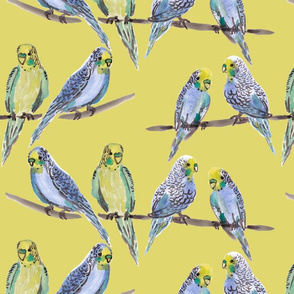 budgies YELLOW