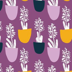 Bold Hyacinth