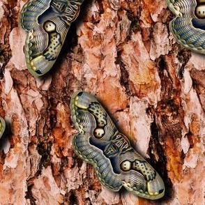 owl moth chevron