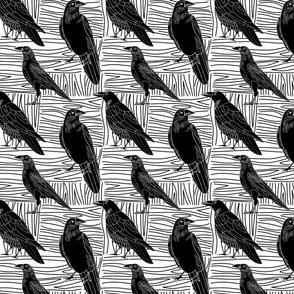 Crows in Black and White