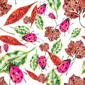 Ladybird Bright