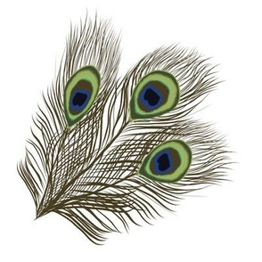 Peacock  Feather Group