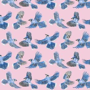 water color blue jays pink medium