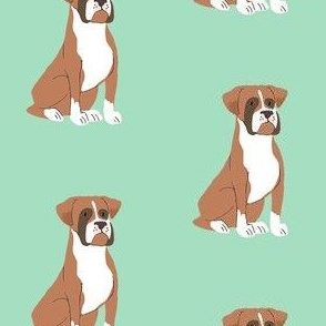 Sweet brown Boxer dog on mint background