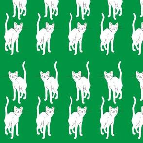 I spy a slinky sly kitty - purrrr - green and white