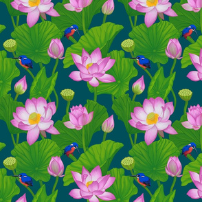Asian Pink Lotus Flowers Amongst Lily Pads