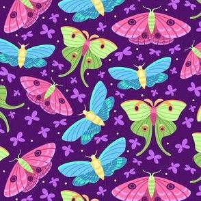Spring Moths