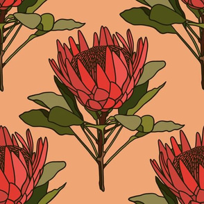Proteas on peach