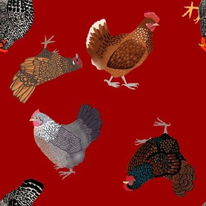 Chickens red