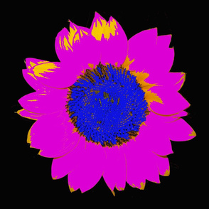 bright pink sunflower!
