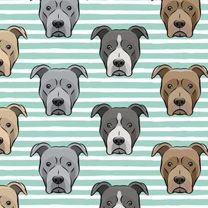 all the pit bulls - aqua stripes LAD19