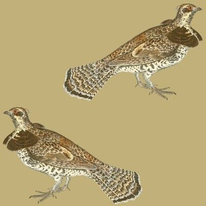 "ruffed grouse, 6"" on wheat tan"