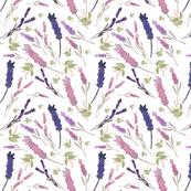 Lavender Sprays (white)