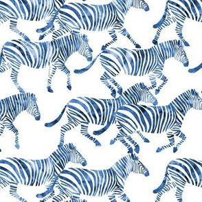 (med scale) zebras in blue