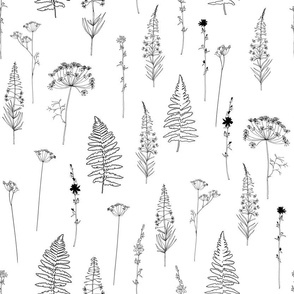 Botanical black fern leaves, dill or fennel, chicory and fireweed wild flowers and plants on white