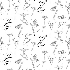 Botanical  wildflowers, plants, herbs , dill and grasses in black on white