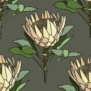 Proteas on grey