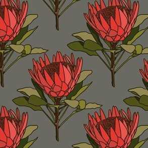 Proteas (red) on grey - small