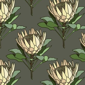 Proteas on grey - small
