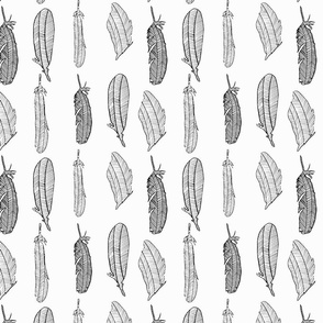 Feathers black and white stock
