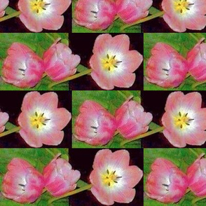tulips in vase blk 90