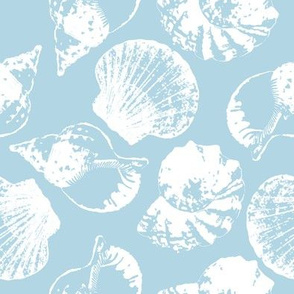 Sea shell nothern blue