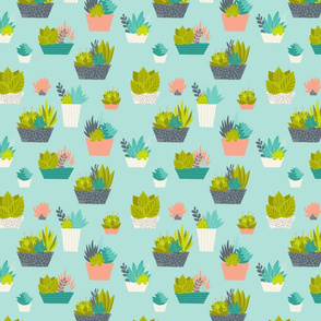 Succulents_ContainerGarden_SmallScale