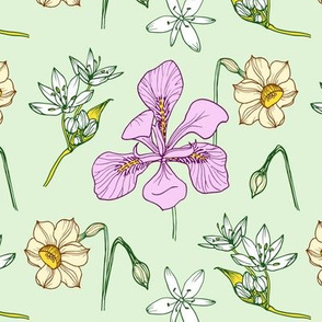 Spring wildflowers -  irises and daffodils