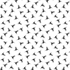 Black and white hummingbirds - white