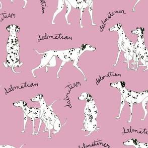 Dalmatian Playful Writing