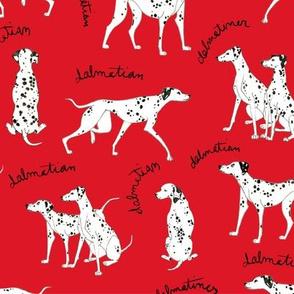 Dalmatian Playful Writing Red