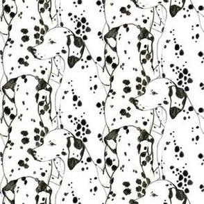 Dalmatian Infinity