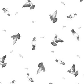 Take Flight Pigeons on White