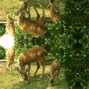 Grazing deer and fawns