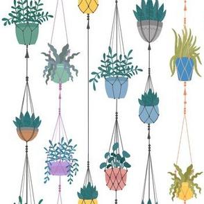 Hanging Plants in  Macrame Plantholders