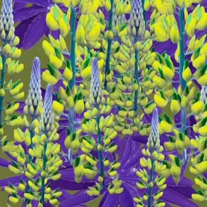lupin-repeat purple yellow-ed