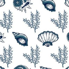 Seashells V.01