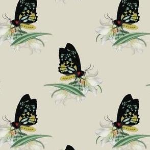Butterfly KeyWest