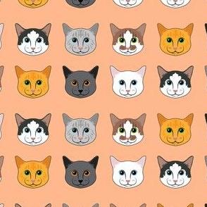 All the Cats- Orange