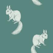Squirrel sketch reversed