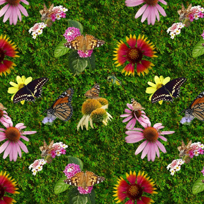 Butterfly Pollinators