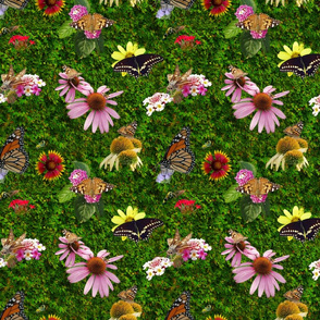 Butterfly Pollinators on Flowers