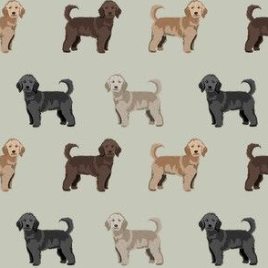 doodle dog  fabric - golden doodle fabric, doodle dog coat colors, dog breed, dog breed fabric - apricot, light, cream, brown, black doodles