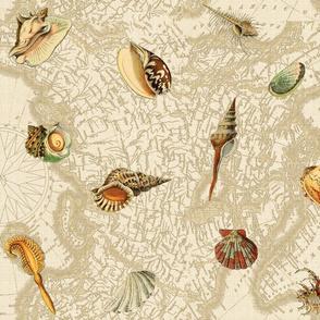 Nautical Sea Shells