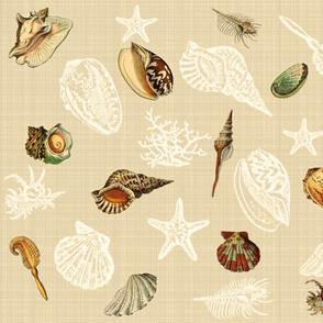 Sea Shells n Silhouettes