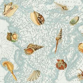 Nautical Map w  Sea Shells
