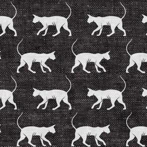 Sphynx cat - grey on grey - hairless cat - LAD19